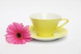 Lilienporzellan Daisy Tassen und Untertassen
