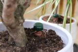 Blumat Classic Wasserspender für Zimmerpflanzen